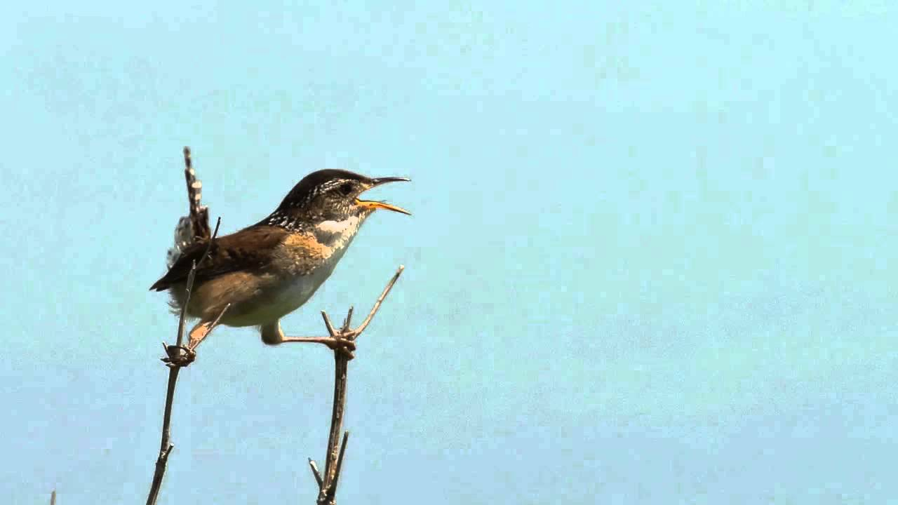 Sound of Birds