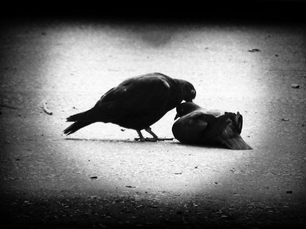Sorrow in Love